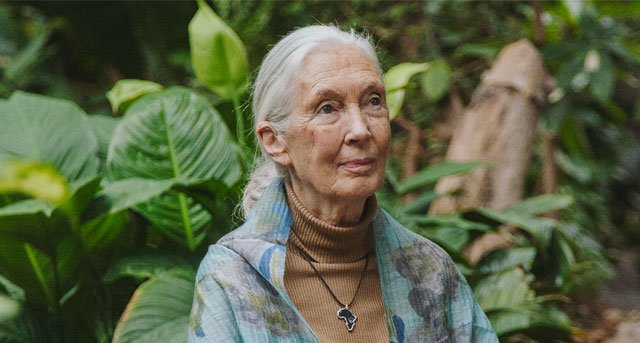 ALMA Jane Goodall portrait The NBP
