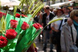 roses vermelles en Sant Jordi