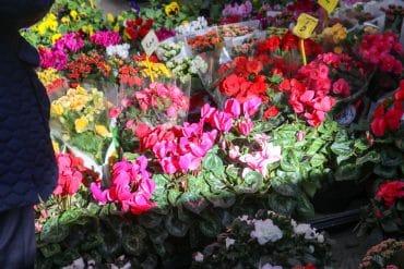 botiga de flors barcelona